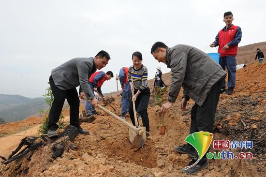 田阳县青年志愿者到头塘镇联坡村六合屯开展学雷锋志愿植树活动。图为植树活动现场。